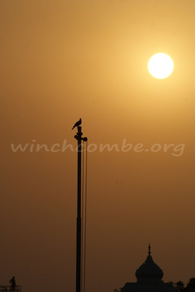 bird on pole